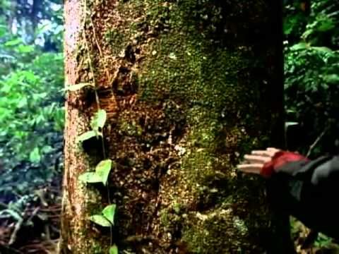 michael jackson earth song video